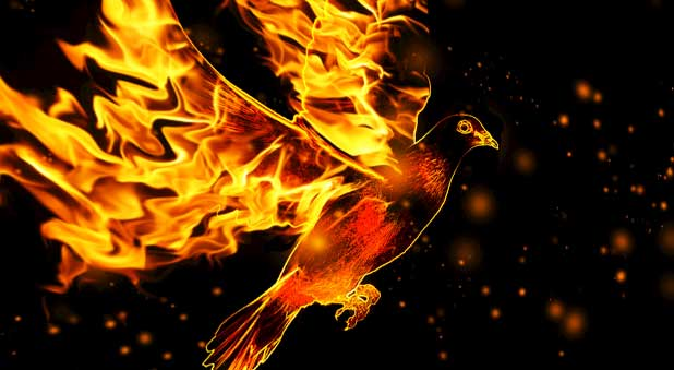 fire and dove