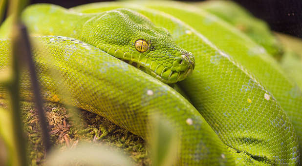 What the Python Spirit Really Wants — Charisma Magazine